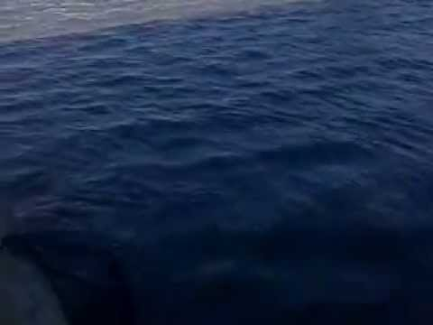 pesca de bogas rio santa lucia uruguay