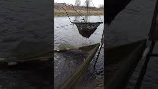 Карамышевский рыбхоз Козловского р-на.