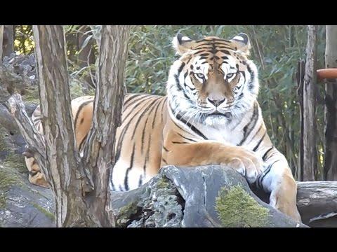 Zoo park di Pistoia, tour completo