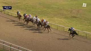 Vidéo de la course PMU PRIX DU CHENE DES GRES