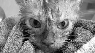 СМЕШНЫЕ ФОТО 4 || КОТЫ || KSENIYA CAT || В КОНЦЕ ЛУЧШИЕ КОММЕНТАРИИ