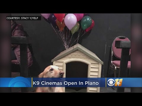 David Fisch - K9 Cinemas' Dog-Friendly Movie Theater Offers Bottomless Wine, Too!!