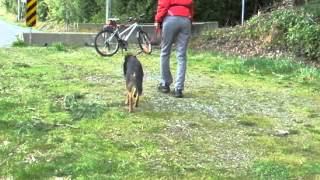 Bat (behavioral Adjustment Training) For Dog's Fear Of Bicycle And (unintentional) Trigger Stacking