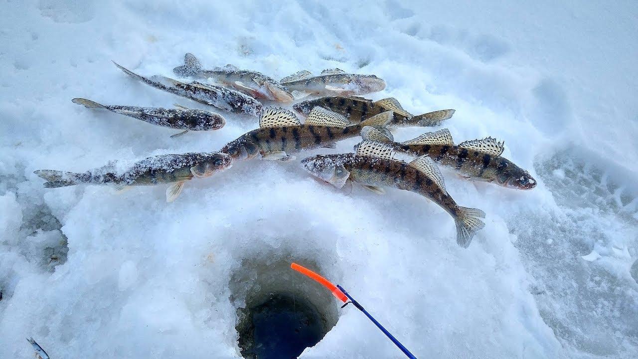Икское устье зимняя рыбалка