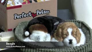 Perfect Petzzz : Beagle