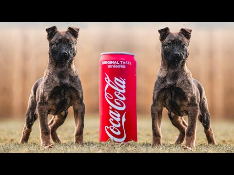 The Strongest Dog Breeds For Their Size