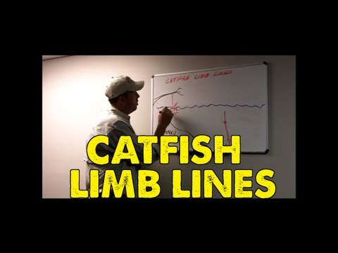 How To Catfish With  Limb Lines
