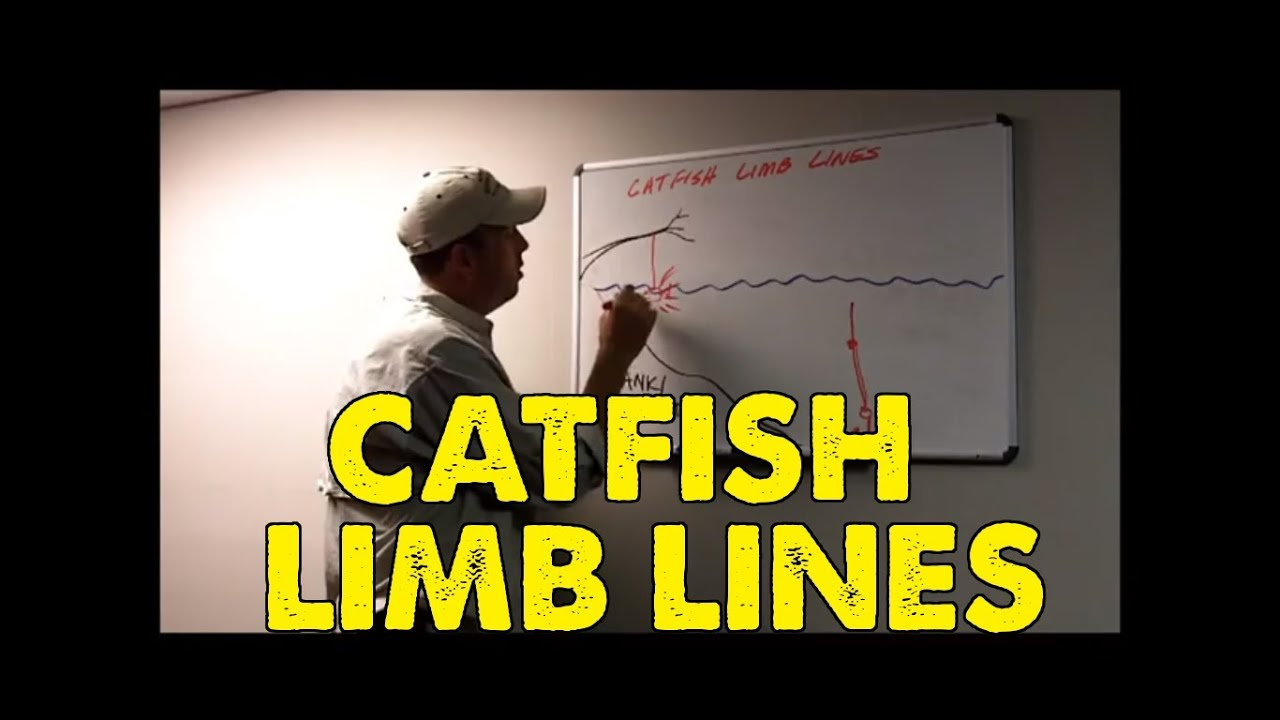 How To Catfish With Limb Lines Learn To Catch Catfish Youtube