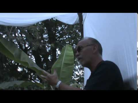 Dzogchen Jackson Peterson Realizing No Self