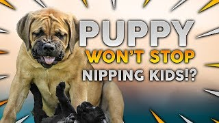 Stop Your Puppy BITING & NIPPING Your Children!