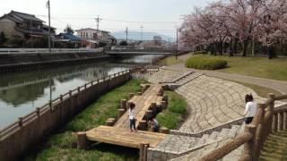 Spring & Sakura 2016 - Yatomi, Aichi, Japan