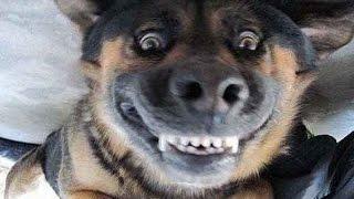 Самые смешные приколы с животными .  Топ   2014 - funny videos