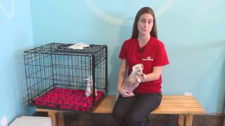 Can Newborn Puppies Be Crate Trained? : Pet Tips