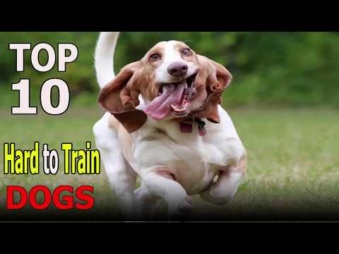 Top 10 Hard to train dog breeds | Top 10 animals