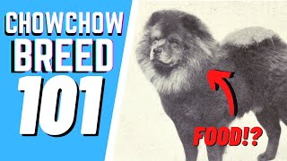 The Chow Chow Breed 101 : Breed & Personality