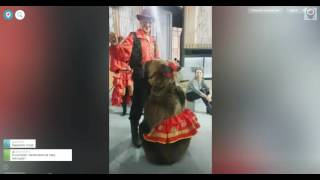 "Медведь набросился на девушку на съемках передачи ""Про любовь"""