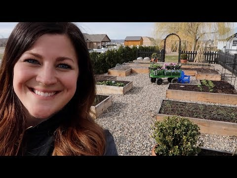 Planting Spring Crops! 👩🌾🌿// Garden Answer