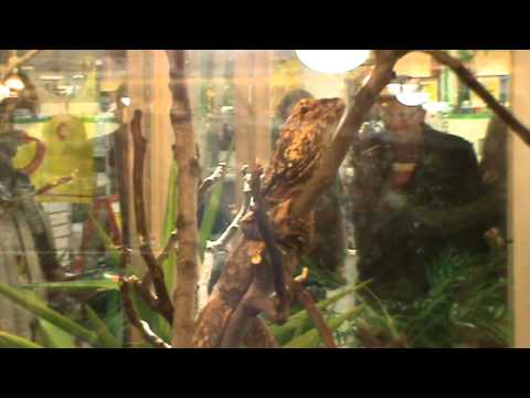 exposition reptile maxi zoo cabries 13480 mpg youtube. Black Bedroom Furniture Sets. Home Design Ideas