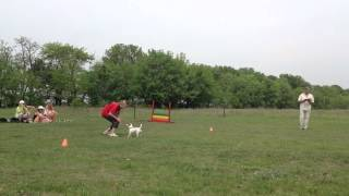 Ukraine Obedience Championship 2012 - Obedience 1 Level- Jack Russell Terrier