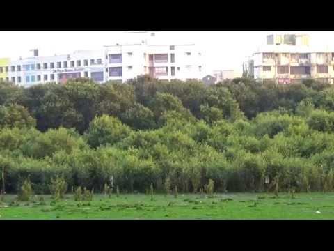 Mangroves - The Natural Protecter Of Marvellous Mumbai.