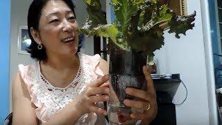 Como plantar alface na garrafa pet da forma mais fácil do mundo