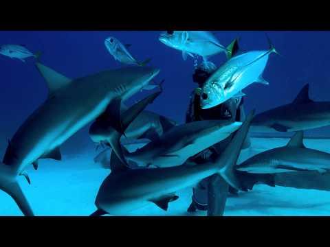 Ocean Geographic Inspiring Change