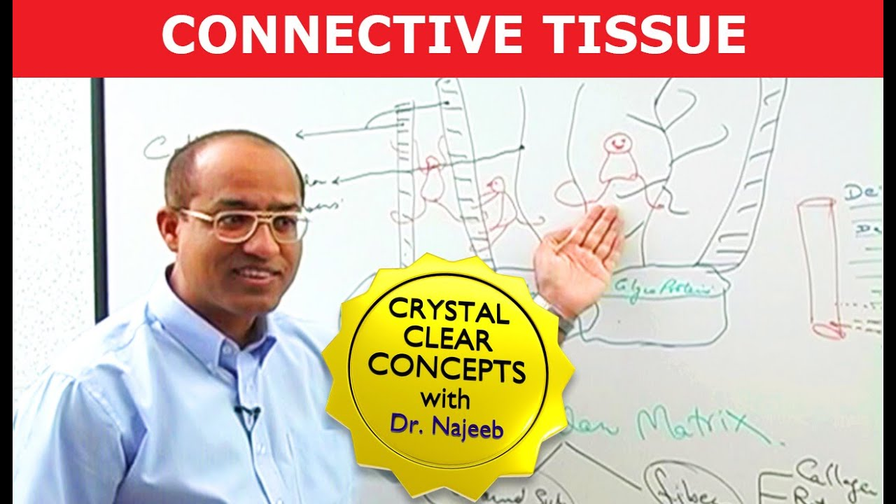 Connective Tissue - Structure & Function - Histology