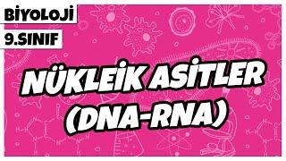 9. Sınıf Biyoloji - Nükleik Asitler (DNA-RNA)  2021