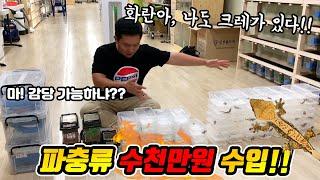 [주노준호 방문기]파충류 농장에 수입이 왔대요!!!