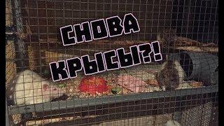 Очередные крысы!? Неблагоприятные условия или ад для крыс?