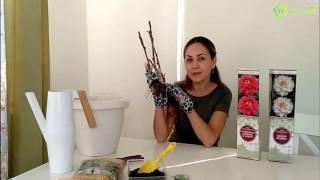 видео Журнал садовода ДЕЛЁНКА