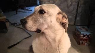 Guilty Dog Goes Through Trash, AGAIN