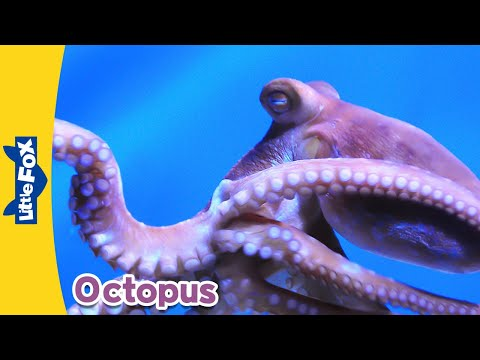 Thumbnail: Meet the Animals 9: Octopus | Level 2 | By Little Fox