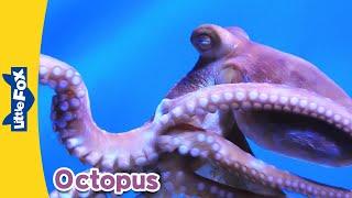 Meet the Animals 9: Octopus | Level 2 | By Little Fox
