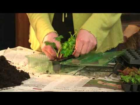 Plug Plants   Charlie Dimmock   Gardening Direct   YouTube