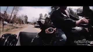Rescue Dogs in Sidecars (clip from Sit Stay Ride movie)