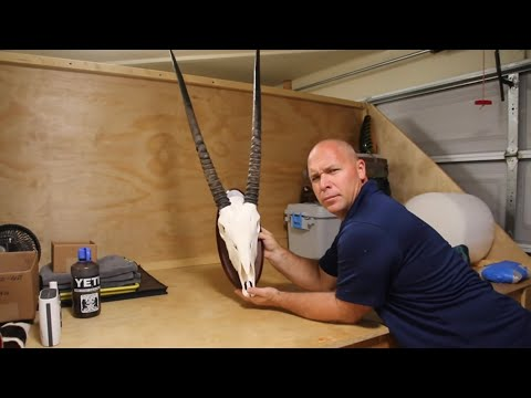 """GEMSBOK HUNTS AND SKULL CLEANING DAY 4 """"GRAPHIC"""