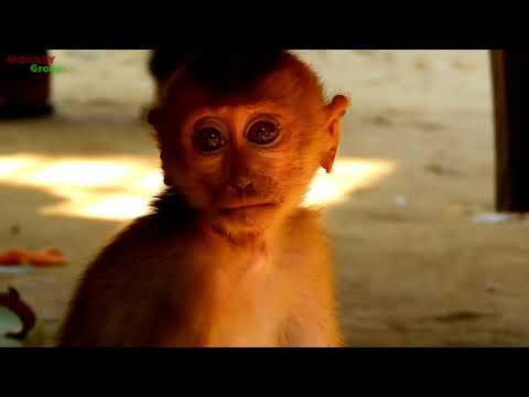 WOW, So happy baby monkey Axel want to play with them