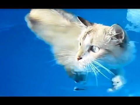 Funny Compilation. Swimming Cat. Katzen schwimmen. Подборка. Кот любит плавать.