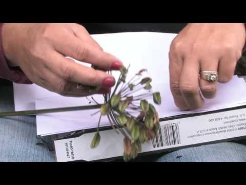 Gardening Tips :