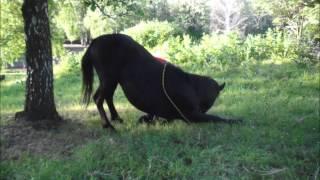 Koń Pick Stadnina koni huculskich w Nielepicach