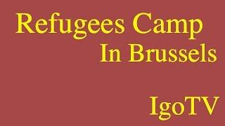 видео На каком национальном языке говорят в Бельгии