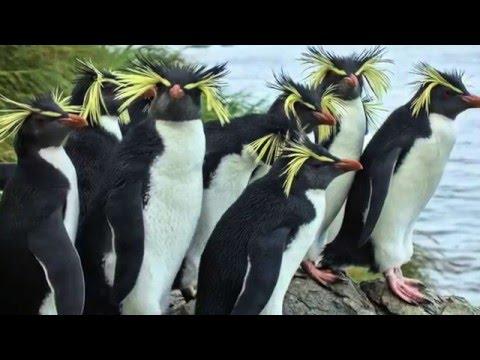 Tristan Da Cunha Travel Guide