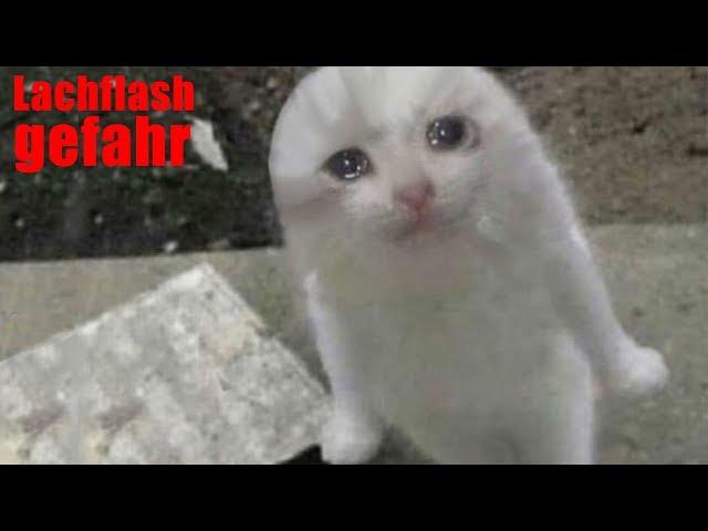 Meine Zuschauer haben mir wieder Katzenbilder geschickt...