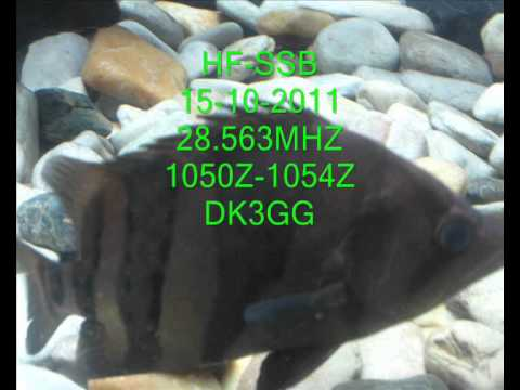 #HF,#SSB,#10M,28.563MHZ,15-10-2011,1050Z-1054Z DK3GG.wmv