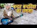 Bandar Bandriya Ka Tamasha 2019 | Funny Video | Comedy Video From My Phone 2018