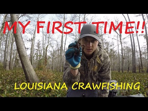 First Time Catching Crawfish - Catching Crawfish In The Atchafalaya Basin