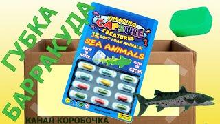 🌊 Морские животные из капсул - серия 7. Губка Барракуда 🐟. Видео для детей про детские опыты