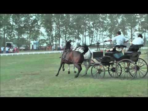 Fogathajtó verseny, Tömörkény 2014. - Bodor Ádám vadászhajtása