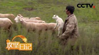 《攻坚日记》 20200429 洛古有伍的心结|CCTV农业